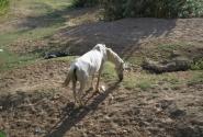 Лошадь. Худая.