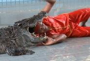 Во время крокодилового шоу