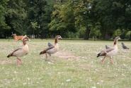 Кенсингтонский парк