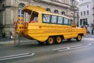 Желтая Дакмарина