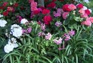 Сады Августа на Капри
