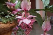 Цветы Сорренто