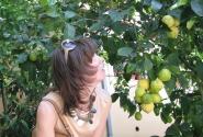 Вот это лимоны!