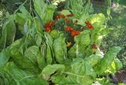 цветы и салат - красиво и практично