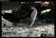 Еще обитатели Поречского аквариума