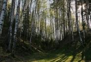 Ивановские пролески