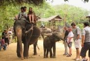 Таиланд. Деревня слонов.