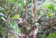 Тропическая тропа