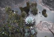 Эндемичная флора Рораймы