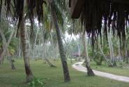 Плантация кокосовых пальм на острове Ла Диг