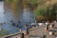 спуститься к озеру и покормить уток