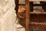 Это просто греческий кот. Живет он тут....