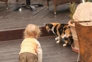 Суслик догнал кошку....