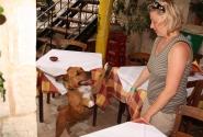 Собака в таверне очень полюбила маму Олю, а вот Оля собаку - не очень...