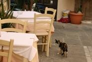 """Еще один кот """"дозором, обходит владенья свои""""..."""