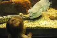 Суслик смотрит на рыбок