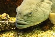 Осторожно, злая рыба!