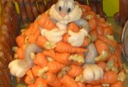 кролик из марципана!!!