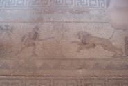 Мозаика в доме Диониса