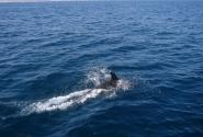 Встреча с дельфином