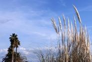 Сан Ремо - эволюция юга 2