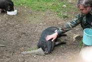 Взаимная любовь - Зоопарк в деревне Мандроги на Онежском озере