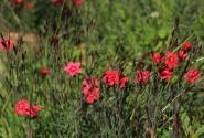 А в Ботаническом саду весна!