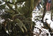 В этом лесу их обитает несколько тысяч, они живут под листьями, в коре деревьев. Делаешь шаг - и с тобой движтся лес.