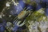 Обитают в морях, пресных водоемах и на суше.