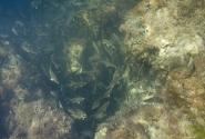Глубина около трех метров, но прозрачнейшая вода смазывает расстояние