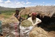 Продавцы сена