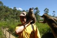 Угости турист бананом