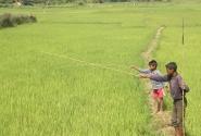 Рыбалка в рисовом поле