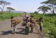 На эфиопских дорогах