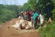 Сборщики кукурузы
