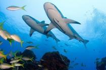 Пляжи Шарм-эль-Шейха закрыты из-за нападений на туристов акул