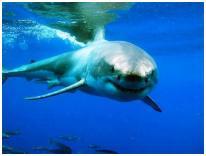 Кормление акул с рук - новое шоу в московском океанариуме