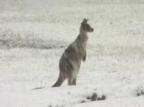 В Южной Австралии - снегопады