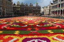 Брюссель украсят цветочным ковром