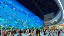 Дубайский аквариум предлагает новую дайвинг программу