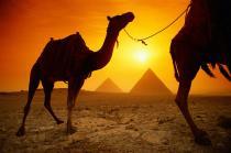 """""""Свиной грипп"""" - еще одна опасность Египта"""