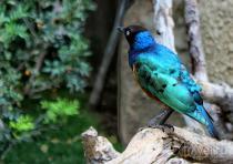 Испания ждет любителей наблюдать за птицами