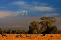 Уганда, Руанда и Кения вводят единую визу