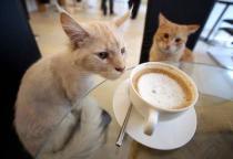 В Париже появится первый кошачий бар