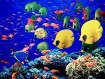 Египет запустил программу очистки Красного моря