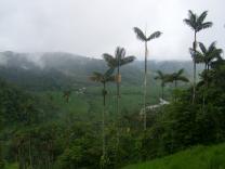 В одном из заповедников Эквадора появится подвесная дорога