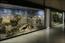 Московские музеи можно будет посетить бесплатно