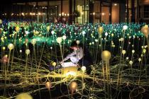Светящаяся поляна - достопримечательность Бата