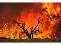 Австралию охватили пожары