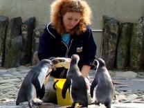 Пражский зоопарк можно посетить бесплатно